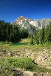 Mountain Hemlocks, Subalpine Firs by small tarn w/ Arctic Willow fgnd, Mt. Larrabee bkgnd