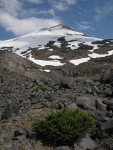 Mt. Baker south face w/ Easton Glacier, dwarf Mountain Hemlock fgnd