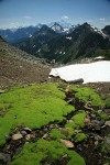 Carpet of moss in wet scree w/ Goat Mtn & Mt Shuksan bkgnd
