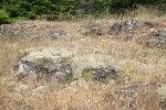 Reindeer Lichens on open rocky slope among grasses