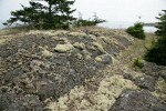 Reindeer Lichens & mosses on rocky bald w/ small Douglas-firs