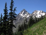 Subalpine Firs on slope above Easy Pass w/ Katsuk & Mesachie Peaks on Ragged Ridge bkgnd