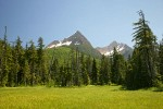 Mountain Hemlocks & Alaksa Yellow Cedars ring Sedge & Narrow-leaved Cottongrass meadow w/ North & South Twin Sisters bkgnd