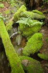 Moss-covered logs, rocks & Lady Ferns by small stream