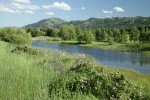 Methow Valley wet meadow w/ Roses fgnd
