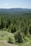 Aldrich Mountains landscape w/ Western Junipers, Ponderosa Pines, Mountain Snowberry fgnd