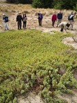 Native Plant Society members observe Common Juniper on sand dune